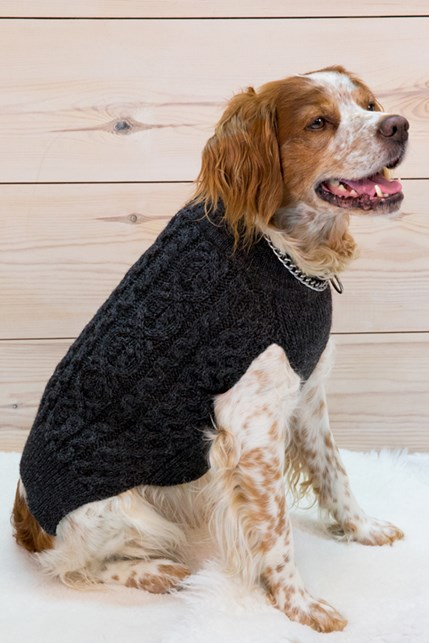 7440_dog jumper_alfie.jpg