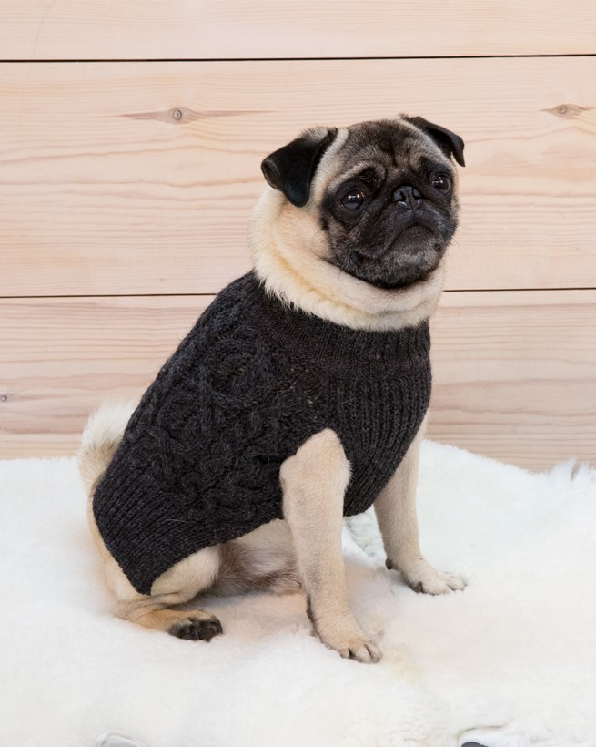 7440_dog jumper_lloyd.jpg