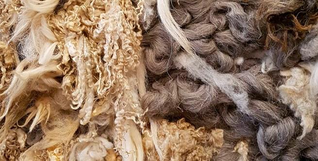 wool week10.jpg
