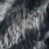 Zebra Black Nappa
